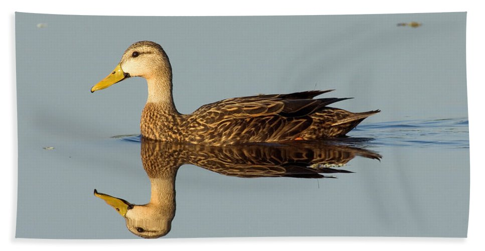 Animal Hand Towel featuring the photograph Mottled Duck by Anthony Mercieca
