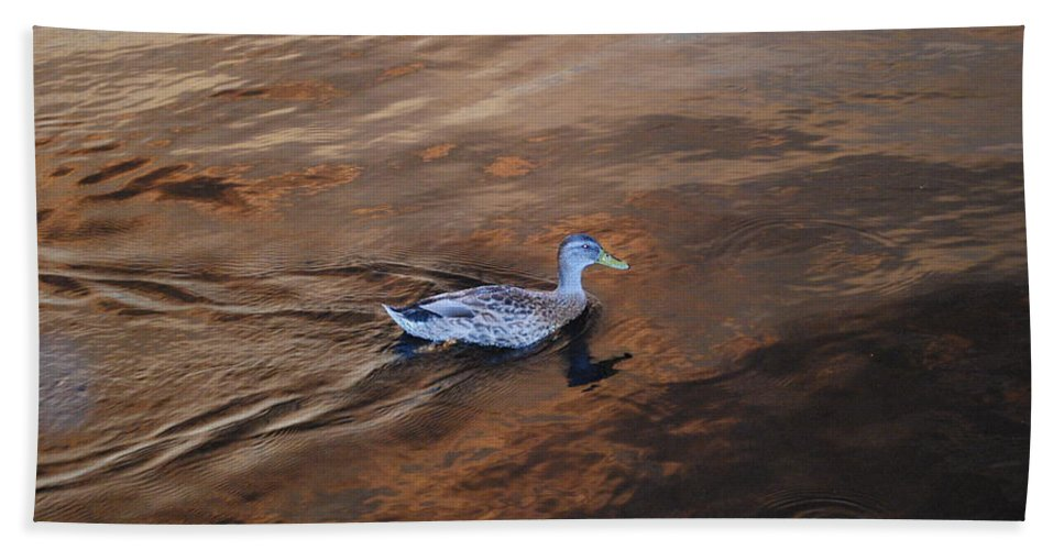 Swimming The Caloosahatchee River Hand Towel featuring the photograph Mottled Duck by Robert Floyd