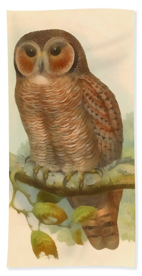 John Gould Hand Towel featuring the digital art Mottled Wood Owl by John Gould