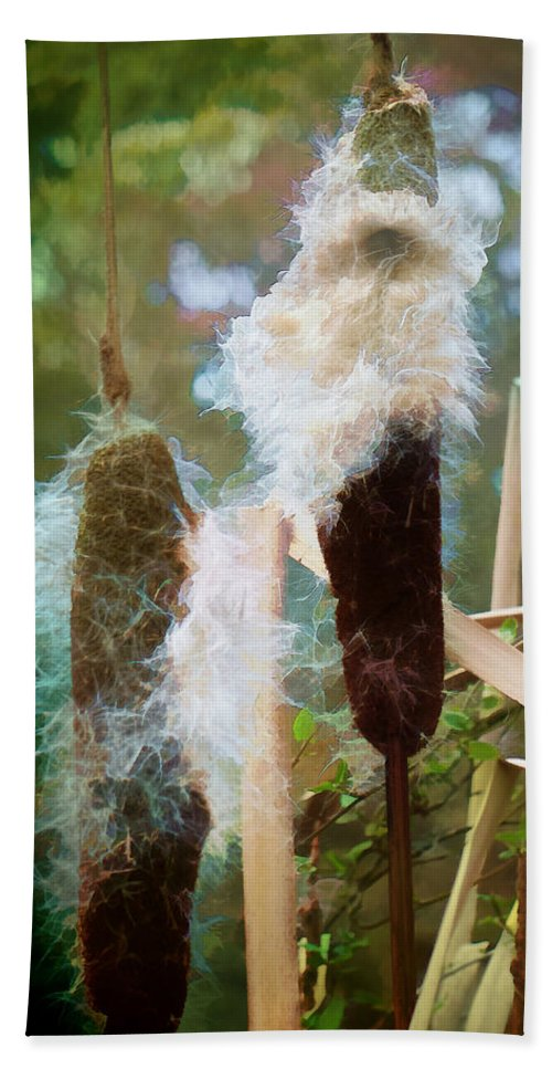 Cattail Hand Towel featuring the photograph Moulting by Steve Taylor