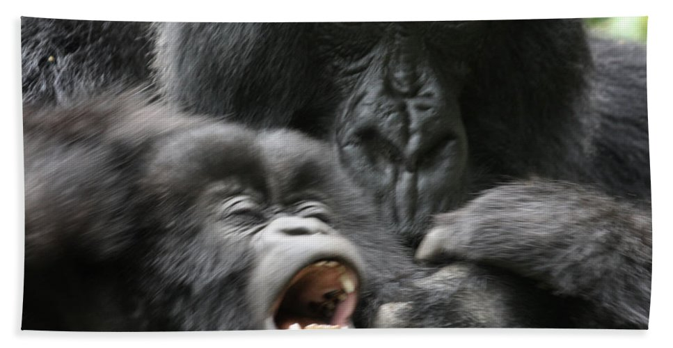 Mountain Gorillas Bath Sheet featuring the photograph Mountain Gorilla Adf2 by David Beebe
