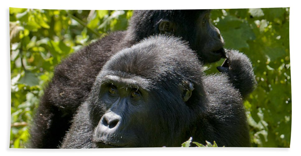 Uganda Hand Towel featuring the photograph Mountain Gorilla With Infant by Brian Kamprath