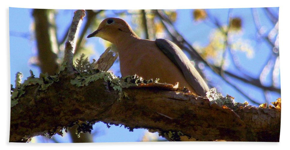 Mourning Dove Bath Sheet featuring the photograph Mourning Dove by CapeScapes Fine Art Photography
