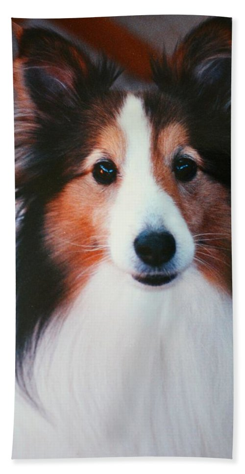 Moxie Hand Towel featuring the photograph Moxie by Kathryn Meyer