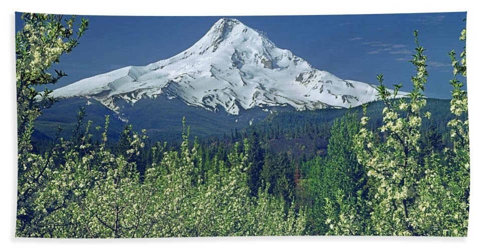 Mt. Hood Bath Sheet featuring the photograph 1m5125-mt. Hood In Spring by Ed Cooper Photography