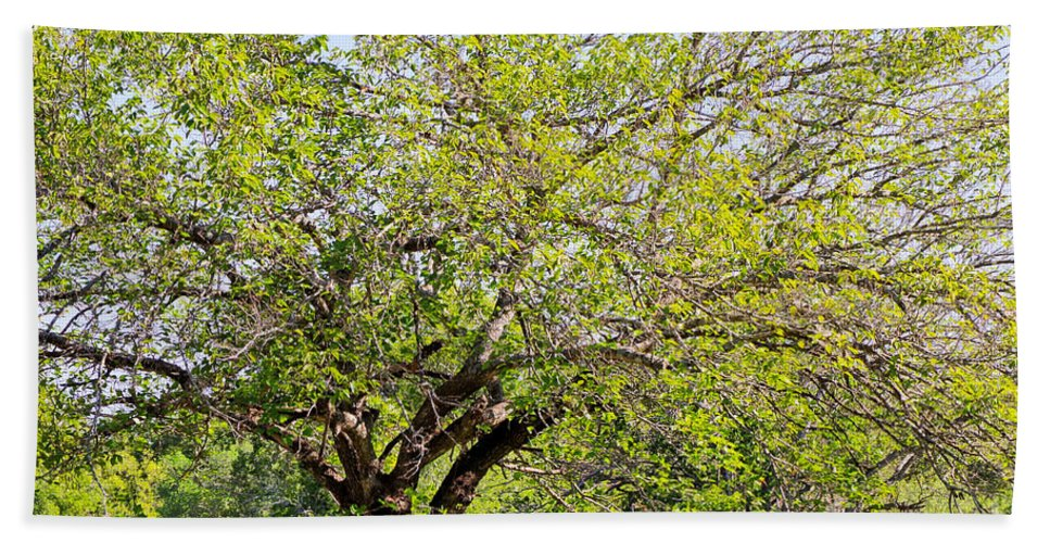 Tree Bath Sheet featuring the photograph Mulberry Tree by Gary Richards