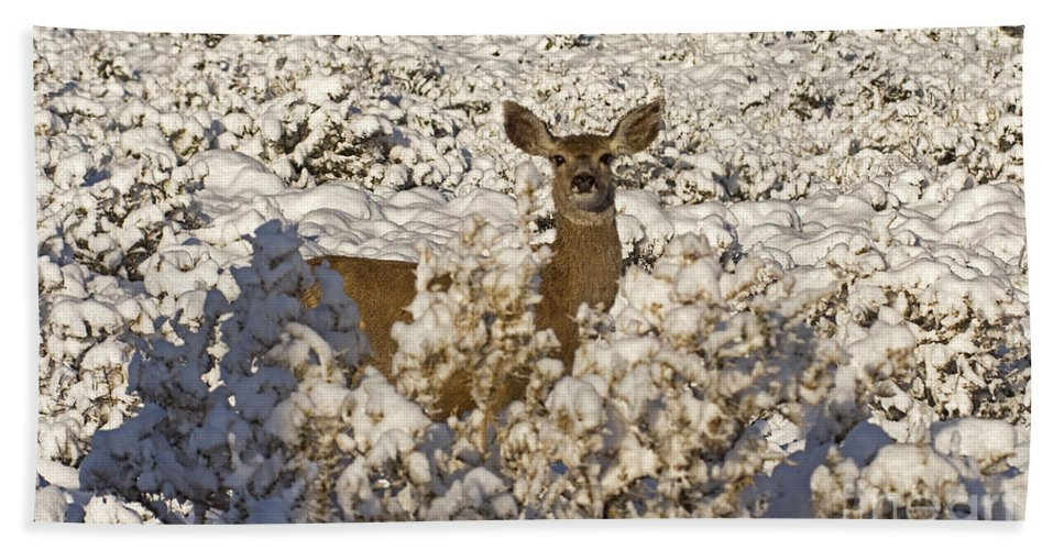 Deer Bath Sheet featuring the photograph Mule Deer  #0061 by J L Woody Wooden
