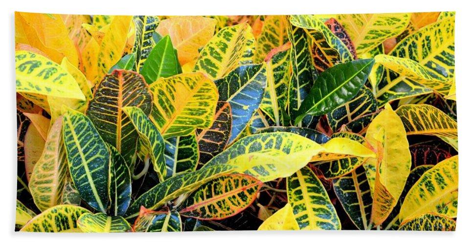 Multi-colored Hand Towel featuring the photograph Multi-colored Croton by Maria Urso