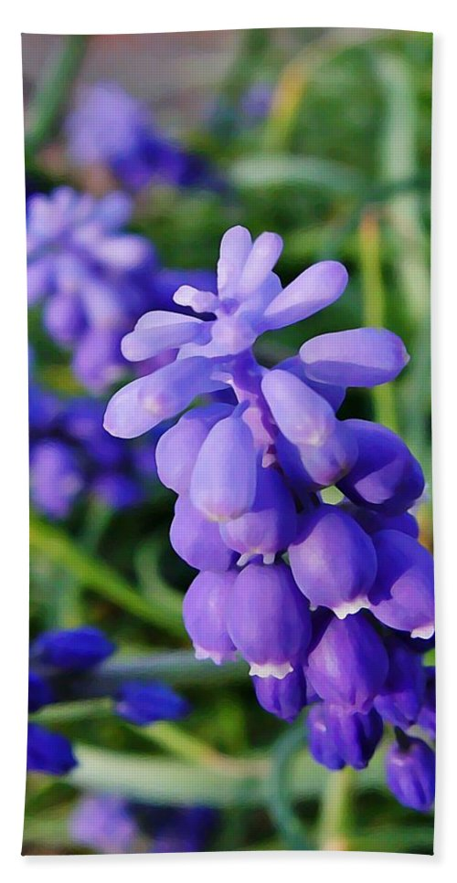 Muscari Hand Towel featuring the photograph Muscari by Chris Berry