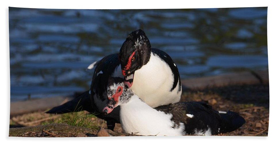 Muscovy Love Hand Towel featuring the photograph Muscovy Love by Maria Urso
