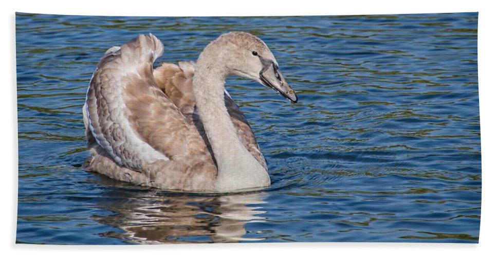 Swan Bath Sheet featuring the photograph Mute Swan Cygnet by Susie Peek