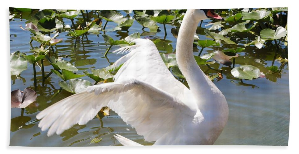 Swan Hand Towel featuring the photograph Mute Swan Wings by Carol Groenen