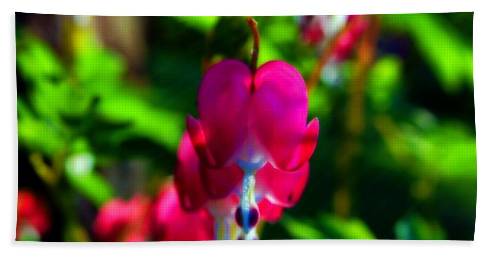 Macro Hand Towel featuring the photograph My Bleeding Heart by Peggy Franz