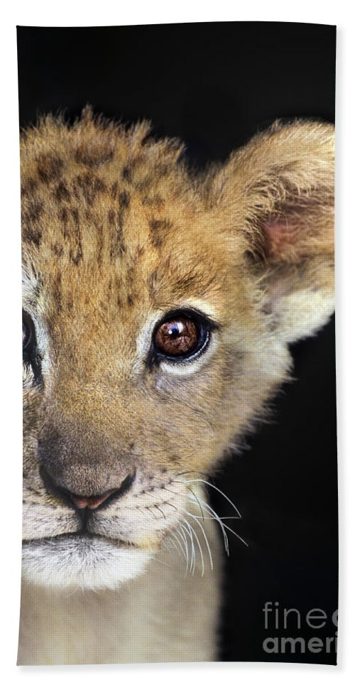 African Lion Bath Sheet featuring the photograph My Grandma What Big Eyes You Have African Lion Cub Wildlife Rescue by Dave Welling