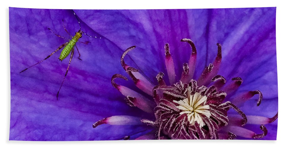 Clematis Hand Towel featuring the photograph My Old Clematis Home by Kristi Swift