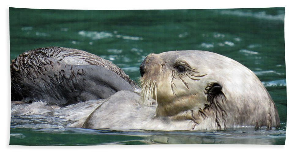 Otter Hand Towel featuring the photograph My Otter II by Stacey May