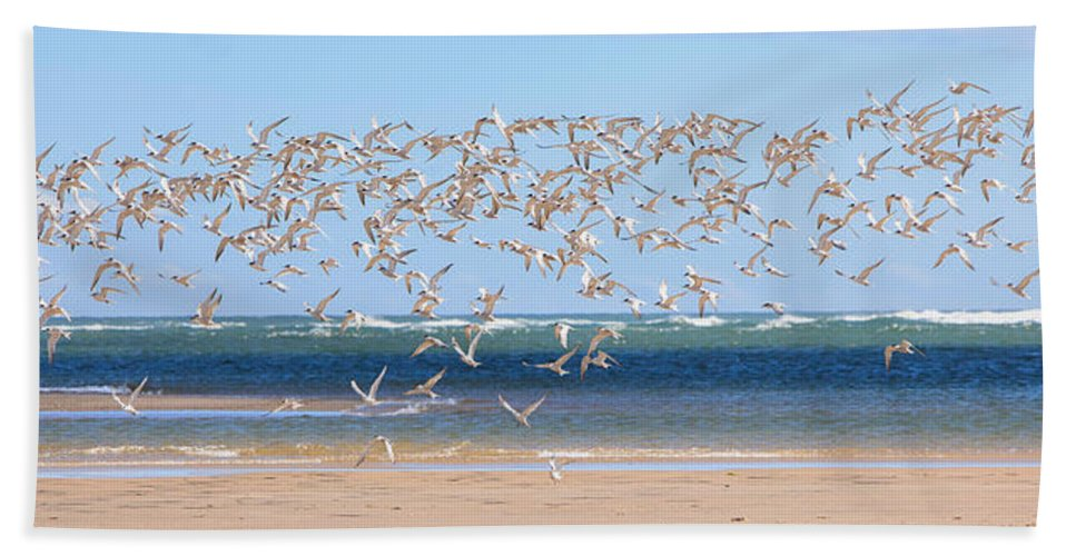 Tern Hand Towel featuring the photograph My Tern by Bill Wakeley