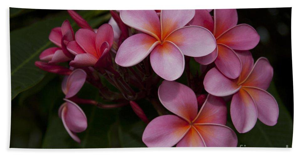 Aloha Hand Towel featuring the photograph Na Lei Pua Melia O Wailua - Pink Tropical Plumeria Hawaii by Sharon Mau