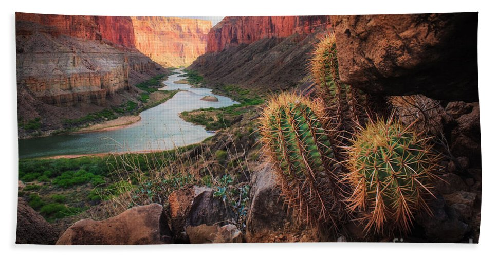 America Bath Towel featuring the photograph Nankoweap Cactus by Inge Johnsson