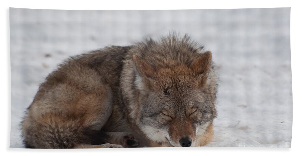 Coyote Hand Towel featuring the photograph Nap Time by Bianca Nadeau