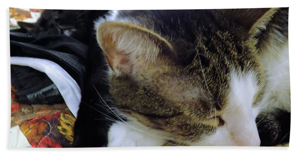 Cats Hand Towel featuring the photograph Nap Time by Robyn King