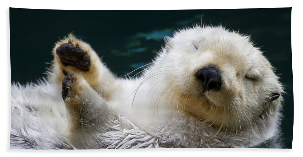 Otter Hand Towel featuring the photograph Napping on the Water by Mike Dawson