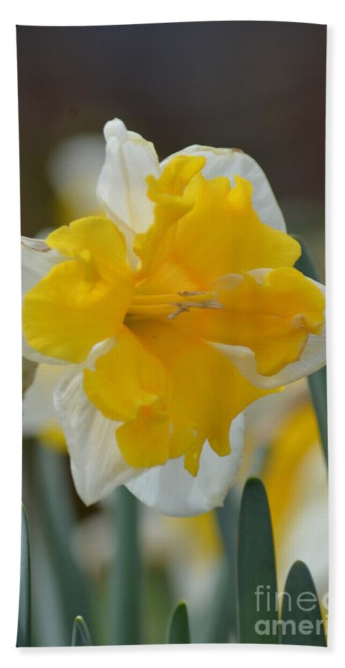 Narcissus 014-2 Hand Towel featuring the photograph Narcissus 014-2 by Maria Urso