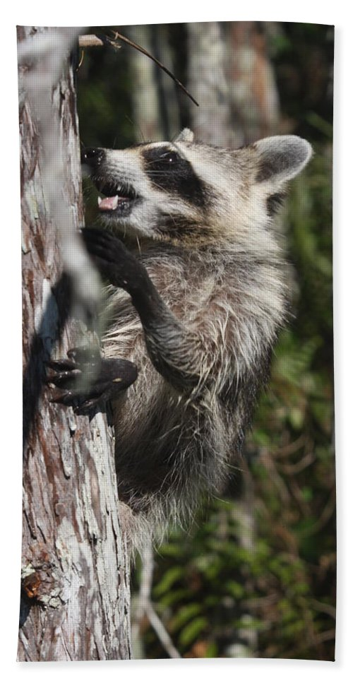 Raccoon Hand Towel featuring the photograph Nasty Raccoon In A Tree by Christiane Schulze Art And Photography