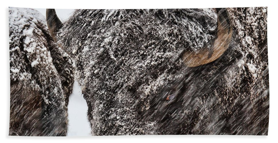 Buffalo Hand Towel featuring the photograph Winter's Fury by Jim Garrison