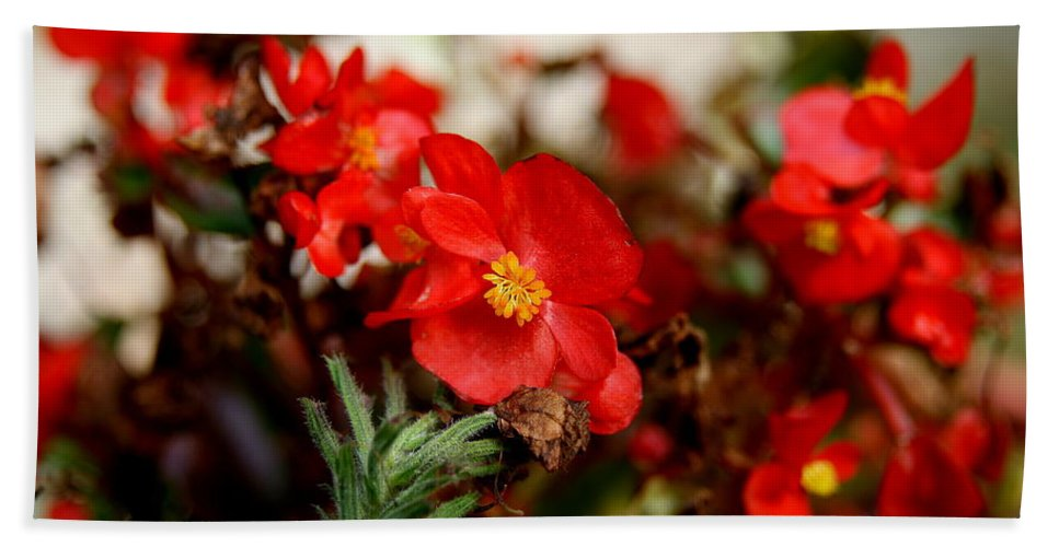 Red Flower Bath Sheet featuring the photograph Nature's Fire by Neal Eslinger