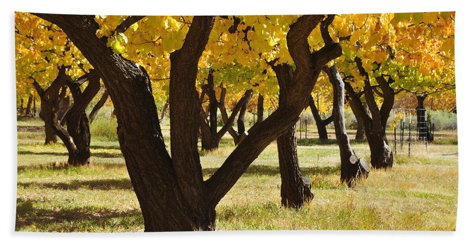 Canvas Prints Bath Towel featuring the photograph Natures Gold by Wendy Elliott
