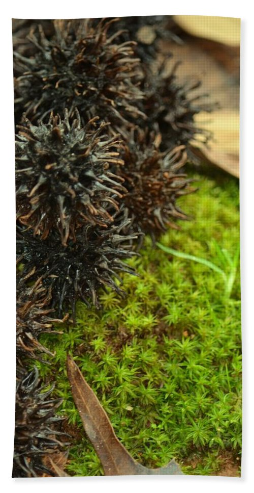 Nature's Moss And Sweetgum Pods Hand Towel featuring the photograph Nature's Moss And Sweetgum Pods by Maria Urso