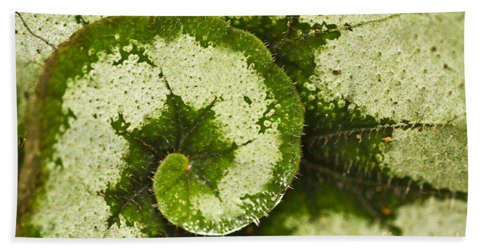 Flora Bath Sheet featuring the photograph Natures Spiral by Heiko Koehrer-Wagner