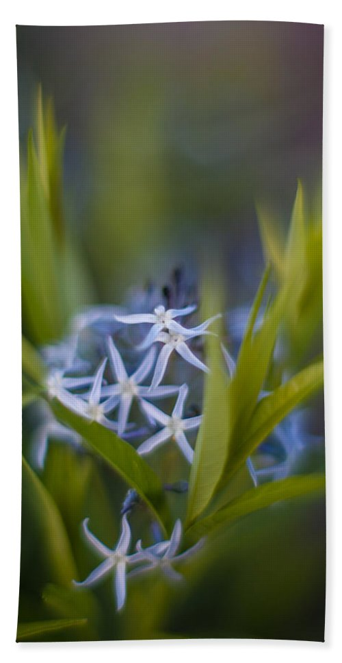Star Flowers Bath Towel featuring the photograph Nest Of Blue Stars by Mike Reid