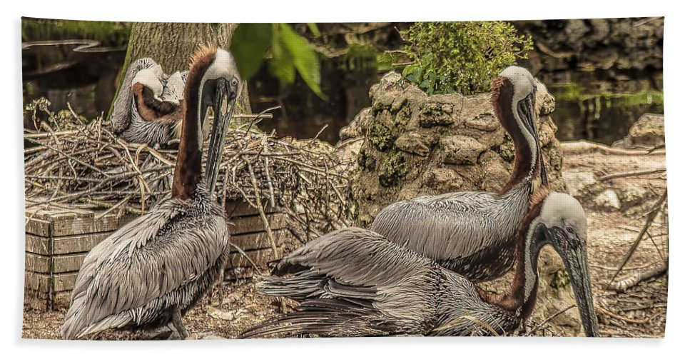 Florida Hand Towel featuring the photograph Nesting Brown Pelicans by Mark Fuge