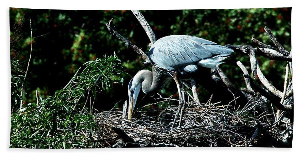 Great Blue Heron Bath Sheet featuring the photograph Nesting Season by Norman Johnson