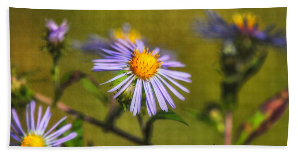 New England Aster Bath Sheet featuring the photograph New England Asters by Susan Capuano