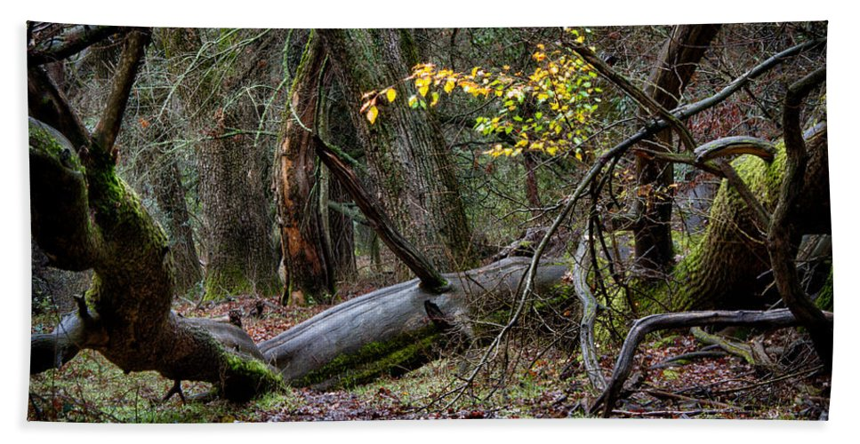 Forest Hand Towel featuring the photograph New Growth In An Old Forest by Robert Woodward