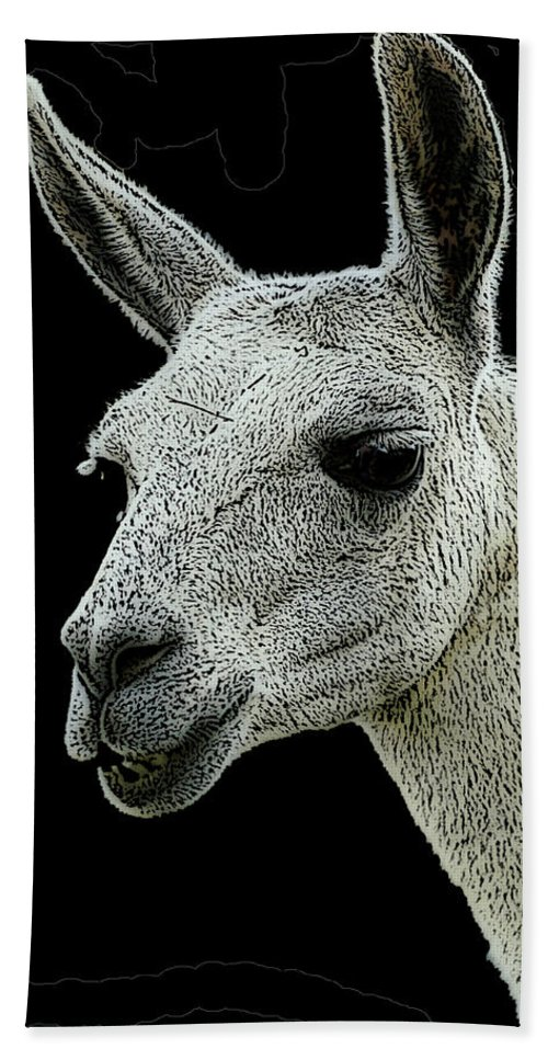 Animal Bath Sheet featuring the photograph New Photographic Art Print For Sale  Portrait Of Llama Against Black by Toula Mavridou-Messer
