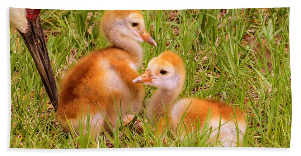 Chicks Hand Towel featuring the photograph New World by Zina Stromberg