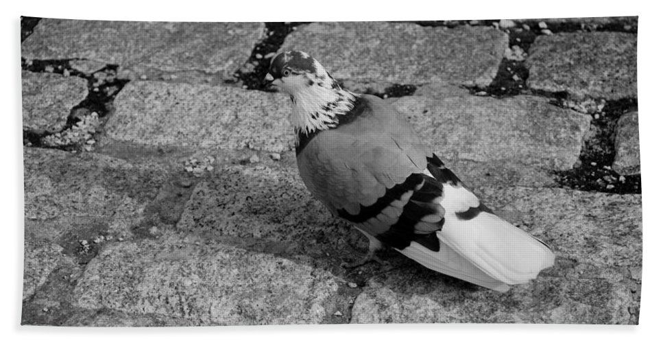 Macro Hand Towel featuring the photograph New York City Pigeon In Black And White by Rob Hans