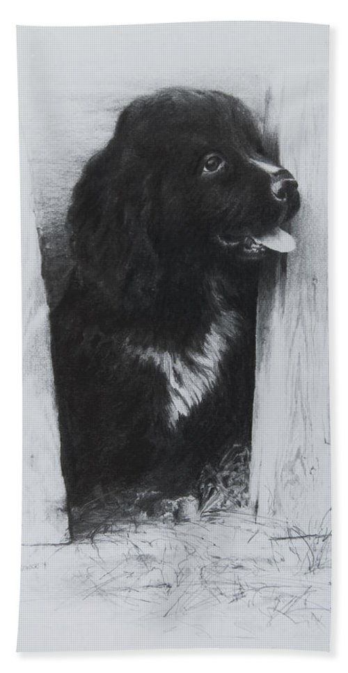 Dog Hand Towel featuring the drawing Newfoundland Puppy by Rachel Christine Nowicki