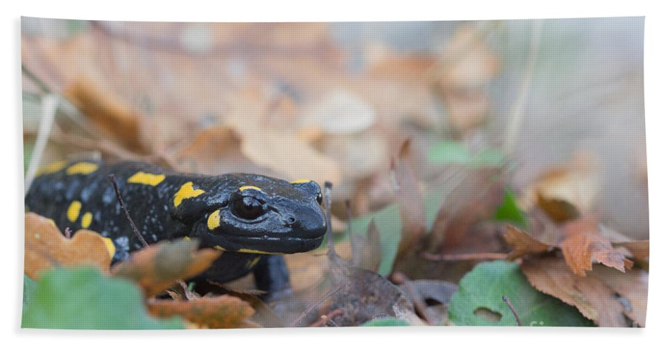 Animals Hand Towel featuring the photograph Nice Fire Salamander by Jivko Nakev
