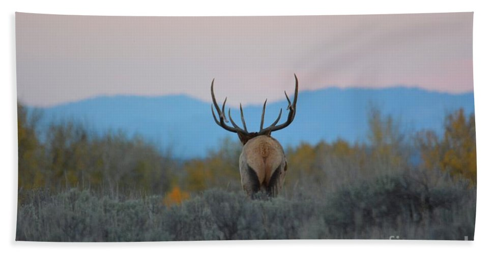 Elk Bath Sheet featuring the photograph Nice Rack by Deanna Cagle