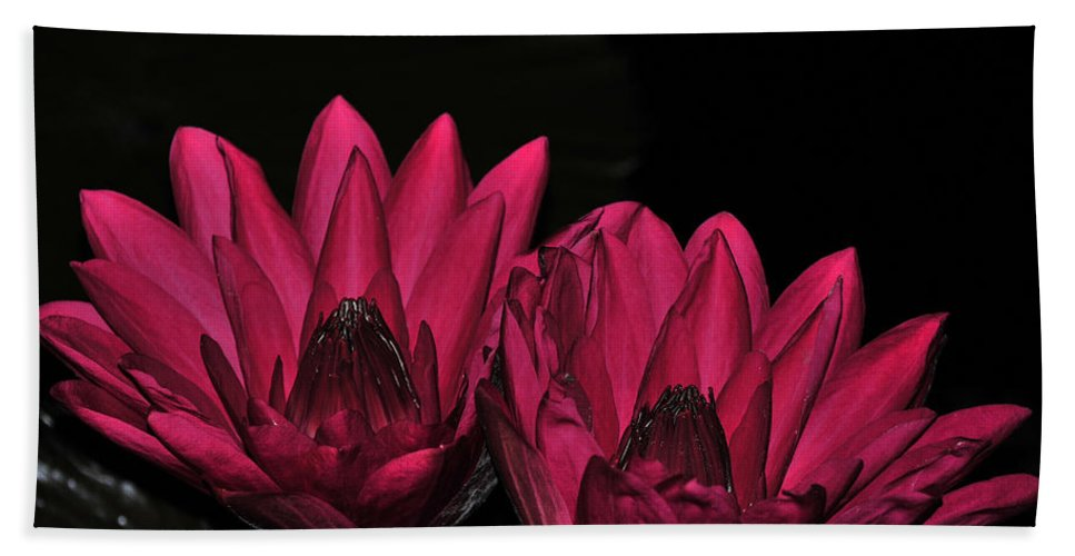 Lily Bath Sheet featuring the photograph Night Blooming Lily 1 Of 2 by Terri Winkler