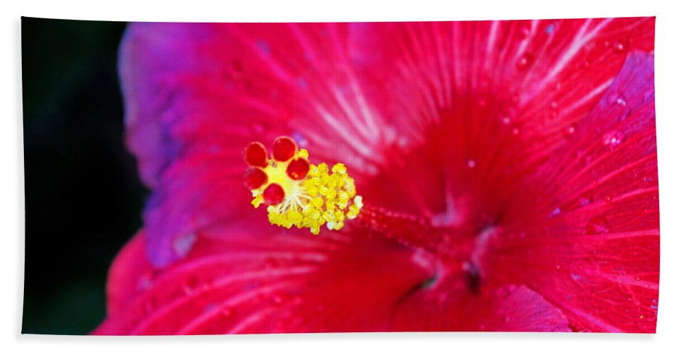 Flowers Hand Towel featuring the photograph Night Fire Hibiscus by Rich Walter
