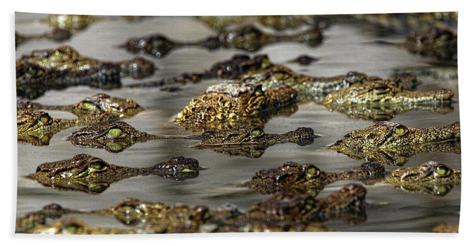 Wildlife Bath Towel featuring the photograph Nile Crocodiles Crocodylus Niloticus by David Santiago Garcia