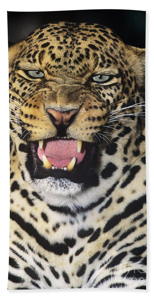 African Leopard Hand Towel featuring the photograph No Solicitors African Leopard Endangered Species Wildlife Rescue by Dave Welling
