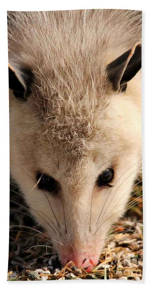 Mccombie Hand Towel featuring the photograph North American Opossum In Winter by J McCombie