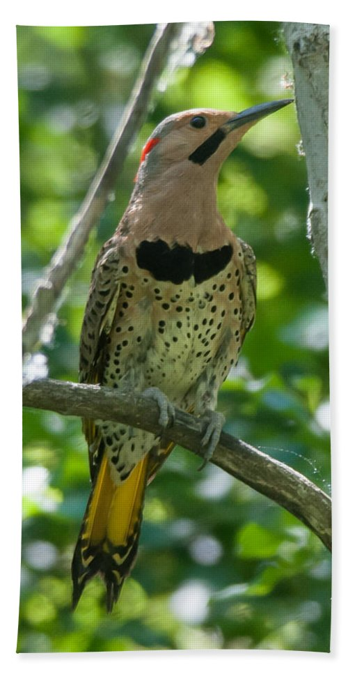 Bird Bath Sheet featuring the photograph Northern Flicker by Richard Kitchen